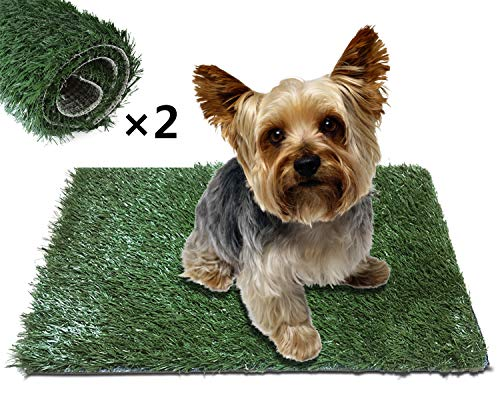 Dog Potty Training Tips With Pad