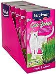 Vitakraft - 24031 - Herbe à Chat - Cat-Gras #2