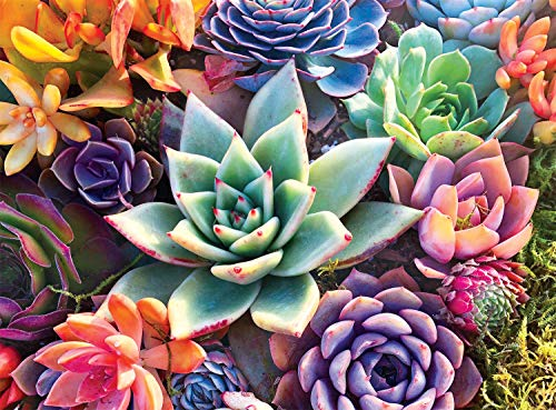 Buffalo Games - Simple Succulent - 1000 Piece Jigsaw Puzzle
