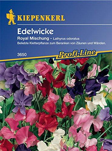 Kiepenkerl, Edelwicke, Lathyrus odoratus Royal Mischung