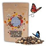 100g Schmetterlingswiese Samen für eine bunte Blumenwiese - Farbenfrohe & nektarreiche Wildblumensamen Mischung für Schmetterlinge