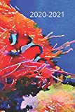 Orange & Black Clown Tropical Fish Lover s  Dated Weekly  2 year Calendar Planner: Cute Small Pocket/Purse Size To-Do Lists,Tasks, Notes, Appointments ... Dec 2022, 25 months Weekly Planner Book)
