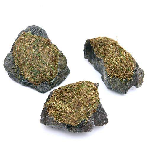 (水草)巻きたて ロックウール付 ヘアーグラスショート 風山石 Sサイズ(8〜12cm)(無農薬)(1個) 北海道航空便要保温