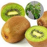 1 Bolsa Semillas De Frutas Semillas De Jardín De Plantas Pequeñas De Frutas Gigantes No Transgénicas Semillas de kiwi