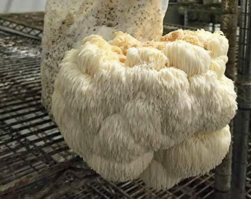 Mushroom Man LLC, Lion's Mane Mushroom Kit