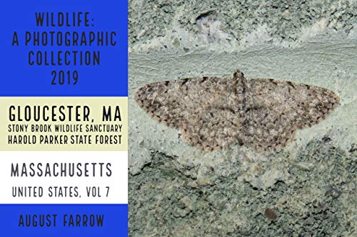 Wildlife: 3 Days in Massachusetts - 2019: A Photographic Collection: Vol 7 (2019: Wildlife in Massachusetts, USA) (English Edition)
