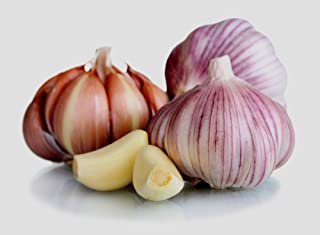 GARLIC BULB (6 Pack), FRESH SIBERIAN HARDNECK GARLIC BULB FOR PLANTING AND GROWING YOUR OWN GARLIC OR EATING