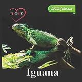 Ilove Iguana calendar 2022: official calendar 2022,12 months, calendar Wild Animals ,Square 2022 Calendar