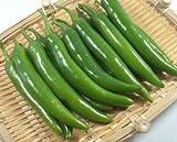 韓国直輸入辛い青唐辛子 1kg(韓国食品、野菜)