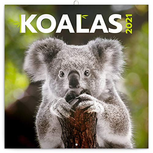 Koalas Wandkalender 2021 Kalender, Broschürenkalender mit Monatskalendarium, Broschurkalender Tierkalender 30 x 30 cm (30x60 Geöffnet)