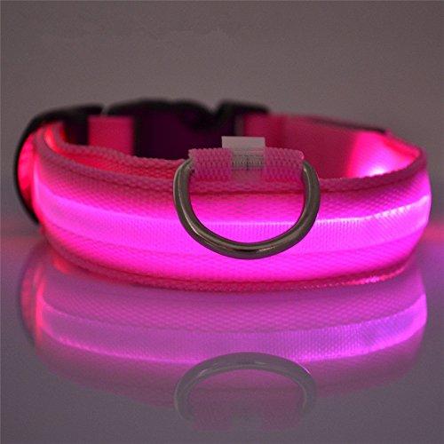 Winnes LED Hundehalsband mit USB Wiederaufladbar Blinkender LED Hunde Sicherheits Halsband Nacht Hundeband für Hunde, Haustier (M 2.5cm X (40cm-48cm), Rosa)