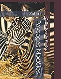 Zèbres - Paysages Modèles - Collection de Photos