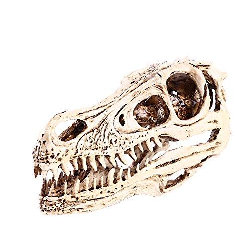 Harz Raptor Dinosaurier Schädel Modell Figur Pub Bar Dekor für Sammlung Tisch Deko Weiß