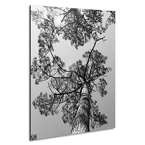 Vertikale Décoration Murale Tableau Alu Forêt de Pins des Landes Noir et Blanc 80 x 60 cm
