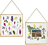 Glass Frame for Pressed Flowers, Leaf and Artwork - Hanging 6x6 Square Metal Picture Frames, Clear Double Glass Floating Frame, Wall Decor Photo Display, Set of 2 Flower Press Frames with Chain… (Gold)