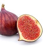 GE Neri (Italian) Fig Live Plant - Ficus carica