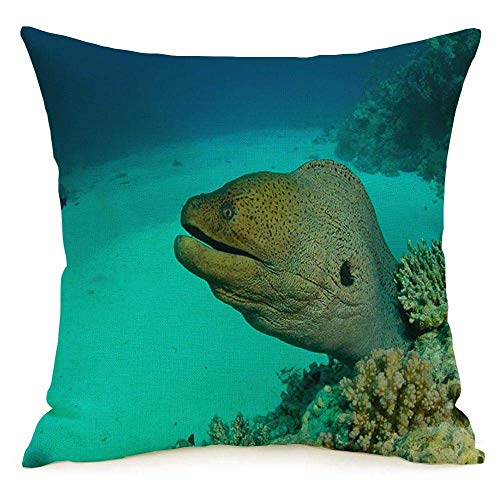 shenhaimojing Funda De Almohada,Funda De Almohada Cuadrada Diver Moray Awaresome Red Scuba Underwater Egypt Arrecife Animales Estación Moda Buceo Vida Silvestre Coral