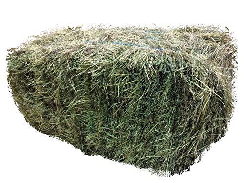 Heu-Heinrich® 7-8kg Bio-Kräuterheu-Quaderballen- Heu für Nager Kaninchen Meerschweinchen Pferde - Ernte 2019