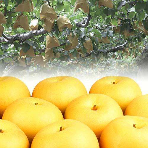 広岡農場のあきづき2.5kg詰(4〜6玉入) 鳥取県産 梨 赤秀(ご贈答用)