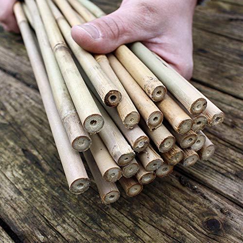 25 Bambusstäbe - Bambusstangen 152 cm lang/ 10-12 mm dick