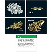 Learning Resources チルト&ビューライフサイクルカードセット