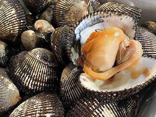(活)赤貝 1kg(7〜8個入)