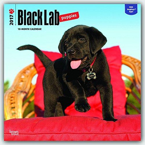 Black Labrador Puppies - Schwarze Labradorwelpen 2017 - 18-Monatskalender mit freier DogDays-App: Original BrownTrout-Kalender [Mehrsprachig] [Kalender] (Wall-Kalender)