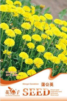 1 original Graines de pissenlit Paquet 50pcs mongoles, Balcon bonsaï graines de fleurs