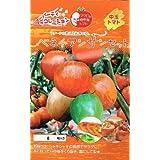 ベネチアンサンセット パイオニアエコサイエンスの中玉トマト種です