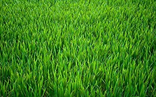 OrOlam Canada Grass Green Seed Bag Tough Enough to Withstand Severe Weather All Climate