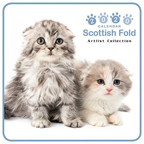 カレンダー 2020 ミニサイズ 壁掛け スコティッシュ・フォールド (ミニ) 403365 ノーマルレンズシリーズ 2019年9月-2020年12月 アーリスト 猫 ねこ ねこ