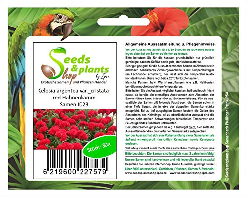 Stk - 30x Celosia argentea var. cristata red Hahnenkamm Pflanzen - Saat ID23 - Seeds Plants Shop Samenbank Pfullingen Patrik Ipsa