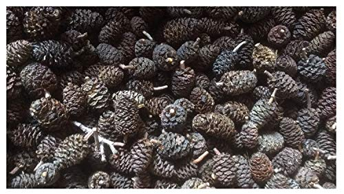 catappa-leaves 50 Black Alder Cones for Fishes and Shrimps - Promote Breeding in Freshwater Tanks - Lowers pH Level in Tank Environment - Perfect for Both Big & Small Aquariums - Pesticide Free