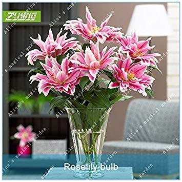 Vista ZLKING Seltene 5 stücke Rosa Doppel Oriental Rose lilie Belonica Birnen Blume Bonsai Frische Hohe Keimungsrate Schnelles Wachstum Birne Pflanze