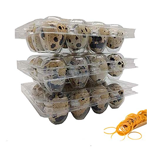 100 Clear 12 Cavity Quail Egg Cartons by Quail Egg Cartons