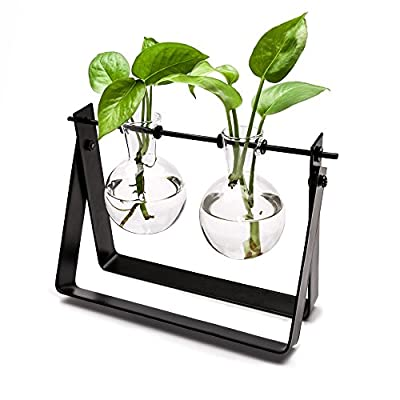 Small Glass Propagation Planter with Stand