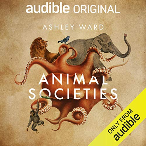 Couverture de Animal Societies