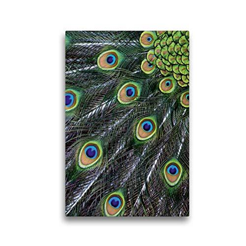Premium Textil-Leinwand 30 x 45 cm Hoch-Format Pfauenfeder Detail | Wandbild, HD-Bild auf Keilrahmen, Fertigbild auf hochwertigem Vlies, Leinwanddruck von Dagmar Laimgruber