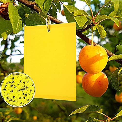 Trappola per Mosche, Trappola Adesiva 30 Pezzi 15x 20 cm, Trappola per Insetti, Insetticida per Piante, Usata per Proteggere Fiori E Frutti di Piante da Giardino