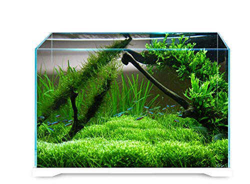 JIANGU Aquarium Desktop Acryl Aquarium Quadrat Aquarium Wohnzimmer Aquarium Regenwald Zylinder Landschaftsbau Mikrograsbehälter