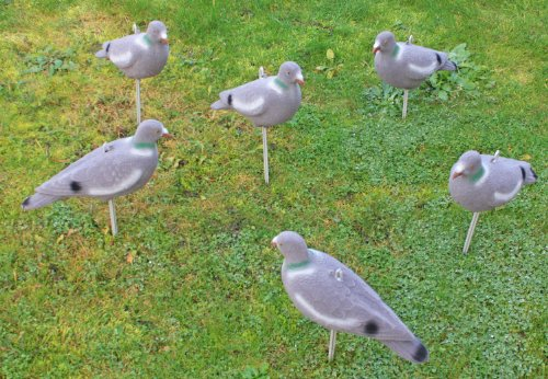Nitehawk - Lockvogel Taube für die Jagd - Vollkörper beflockt - 6 Stück