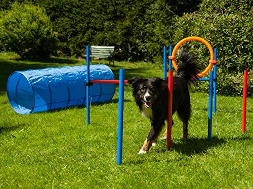 Procyon Agility Set für Hunde mit Hürde, Tunnel und Ring, Hundetraining, Hundeparcours mit Slalomstangen und Sprungring