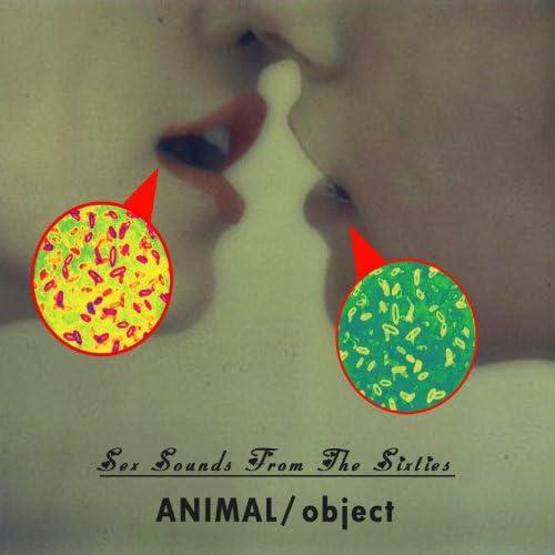 Animal - Object