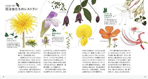 美しき小さな雑草の花図鑑