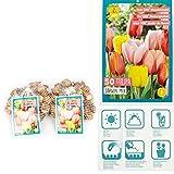 Prächtige Tulpenmischung 100 Zwiebeln