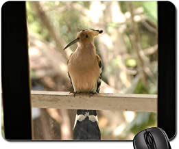 Mouse Pads - Bird Hoopoe Madagascar Endemic Africa Animal