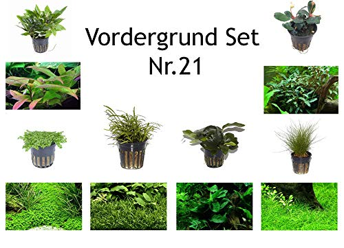 Tropica Vordergrund Set mit 6 Topf Pflanzen Aquariumpflanzenset Nr.21 Wasserpflanzen Aquarium Aquariumpflanzen