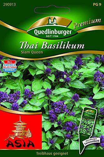 Basilic thai-Queen Siam – Ocimum Basilicum qlb Premium Graines de basilic