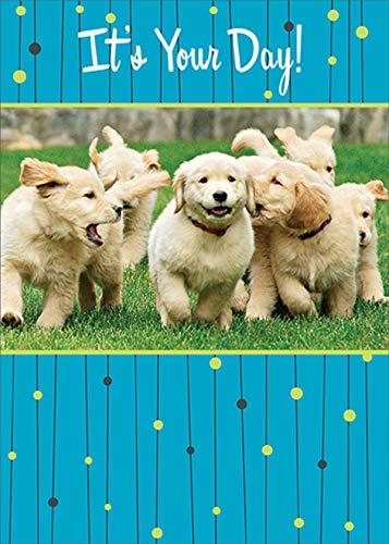 RSVP Pack of Golden Labrador Puppies Dog Birthday Card