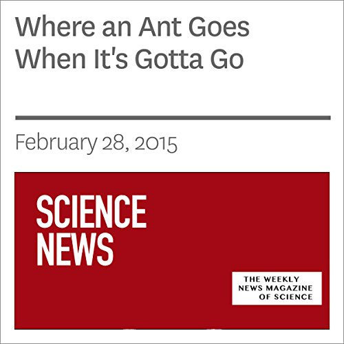 Where an Ant Goes When It's Gotta Go audiobook cover art